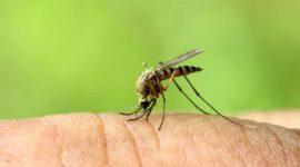 Mosquito Control Athens GA