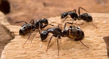 Ant Control in Athens, GA